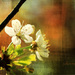 čas kvetov II.