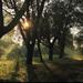 slnko, luče, svetlo (2)...