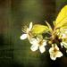 čas kvetov I.