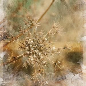 jesenná abstrakcia