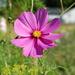 Fialový kvet