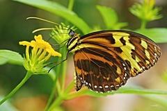 Motýlia krása 4