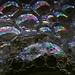 Bublinkový svet 1