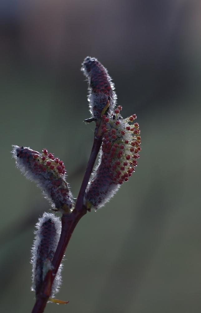 Jarná krása 3
