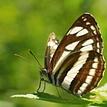 Motýlkovo