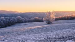 Zimný strom
