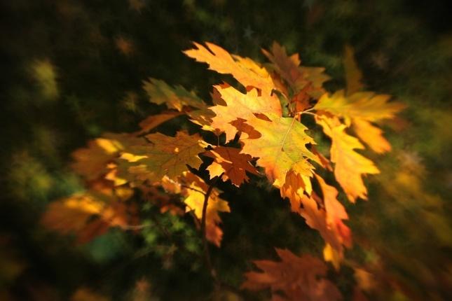... jesenné hviezdne úlety ...