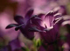 ... lila ...