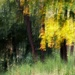 Jesenné maľovanie 7