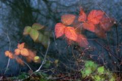 Jesenné maľovanie 12