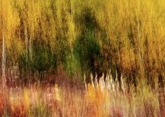 Jesenné maľovanie 16
