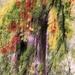 Jesenné maľovanie