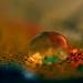... vo víre farebných snov ...