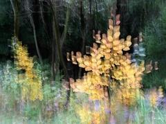 Jesenné maľovanie 15