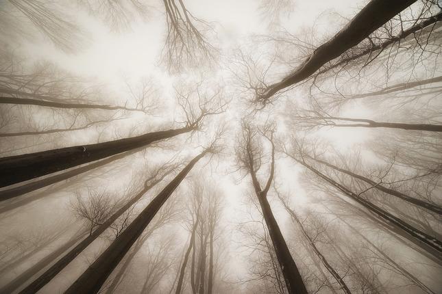 Zápoj stromov