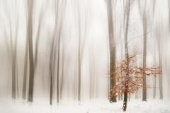 Z jeseňe do zimy