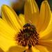 Pracovitá včielka