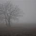 its foggy....