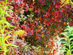 jesenne farby su...