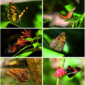 motýle :-)