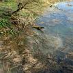 Vody Moravy