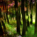 Lesný vesmír