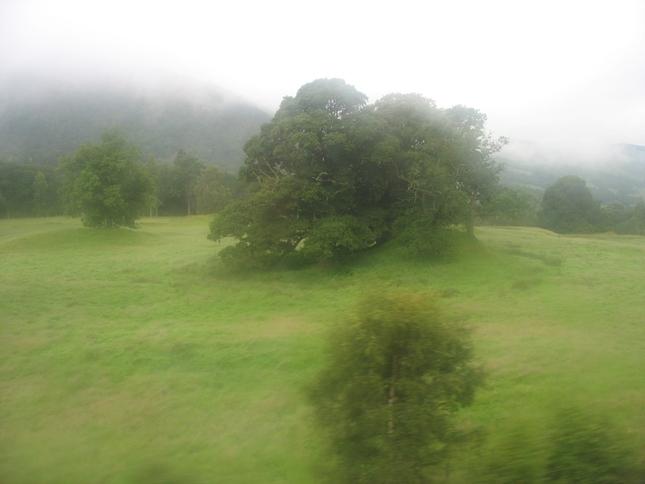 stromček v hmle