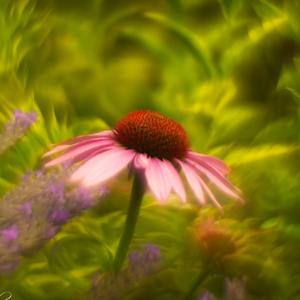 Kvetinový raj