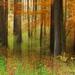 V lese, tomto čase