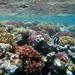 Farebná morská záhrada