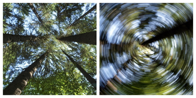 Moje experimenty v lese
