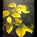 Jesenné svetlá