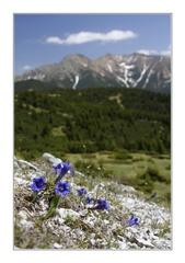 Aj skaly kvitnú
