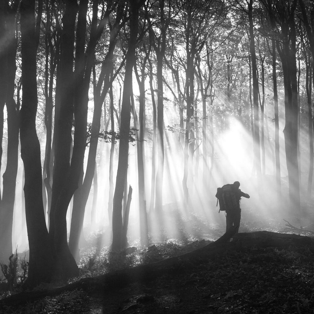 V magickom lese