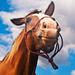 Pán kôň