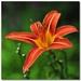 Kvet a 6 postavičiek