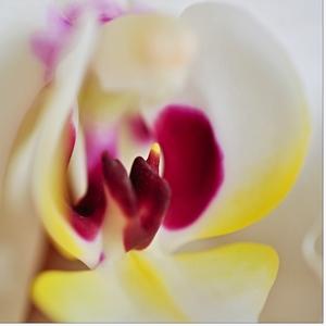 Do stredu orchideje