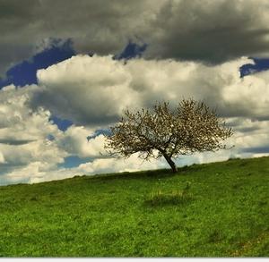 Strom v oblakoch . . .