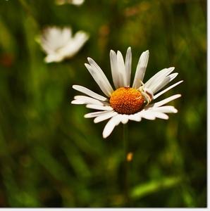 Kvetinovo - chrobákový