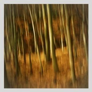duchovia lesa