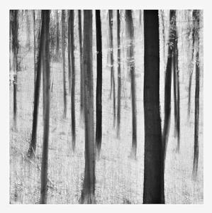 Duchovia lesa Bw