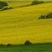 Žltá krajina 2