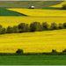 Žltá krajina 1
