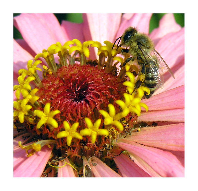 Včielka na kolotoči