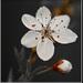 Artflower3