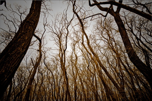 Strateny v lese