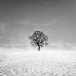 V snehovej búrke