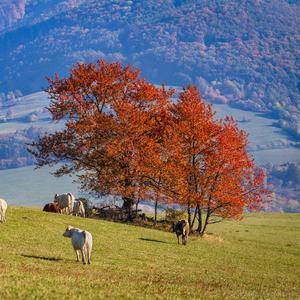 Na pastvine