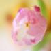 pastelové snenie