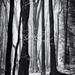 Lesné tajomstvá spod Sitna